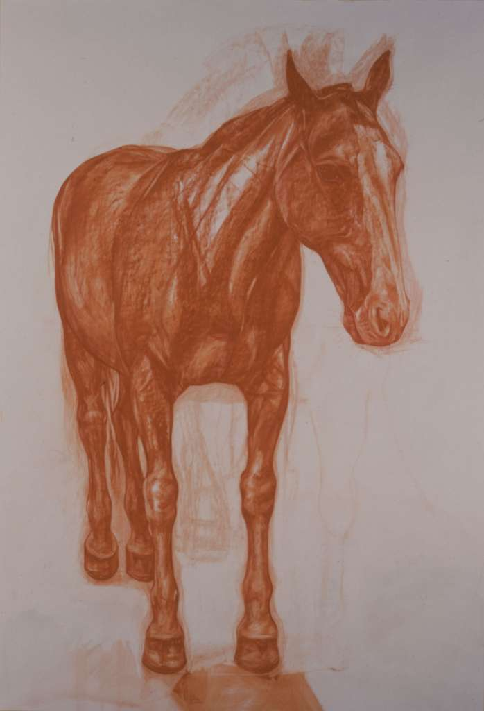 King Suppiluliumus's horse, modelled by Rosita | Conté on Paper | Emma Sergeant